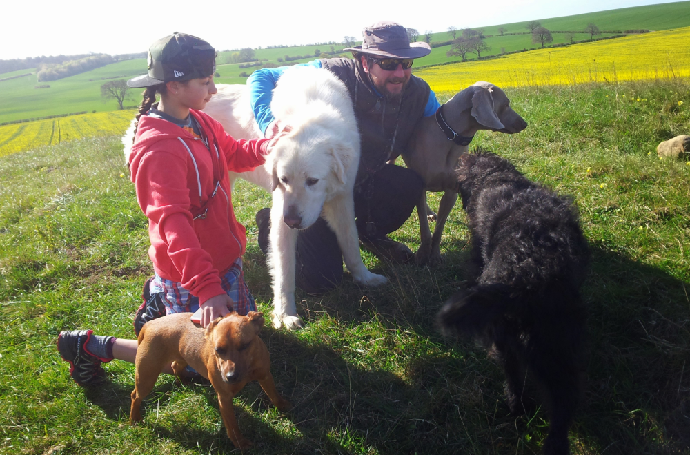 Ash and Dogs Around Us, Bedfordshire - Dog trainer and behaviourist