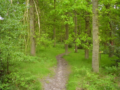 Wykeham Forest dog walk, North Yorkshire - Driving with Dogs