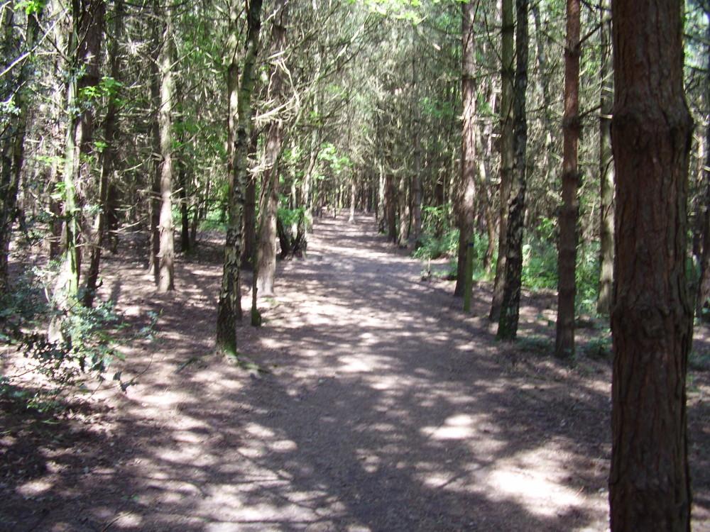Quiet woodland dog walk, North Yorkshire - Dog walks in Yorkshire