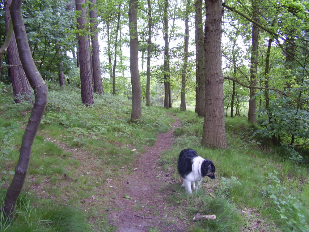 Quiet woodland dog walk, North Yorkshire - Dog walks in Yorkshire