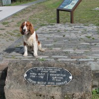 M8 Junction 17 dog walk in Glasgow, Scotland - Dog walks in Scotland