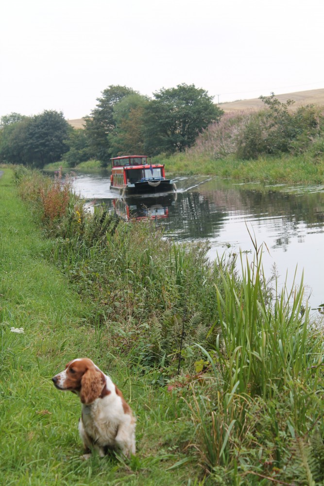 Bishopbriggs dog walk along a canal, Scotland - Dog walks in Scotland