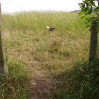 Tankersley local dog walk, Yorkshire - Dog walks in Yorkshire