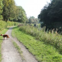 Kirkintilloch dog walk, Scotland - Dog walks in Scotland