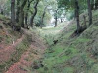 Canal dog walk from Kilsyth, Scotland - Dog walks in Scotland