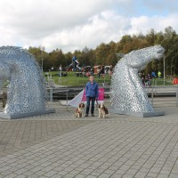 M80 Junction 7 dog walk from Bonnybridge, Scotland - Dog walks in Scotland