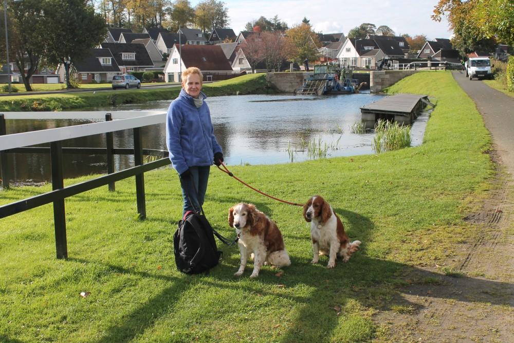 M80 Junction 7 dog walk from Bonnybridge, Scotland - Dog walks in Scotland