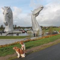 A9 canalside dog walk in Falkirk, Scotland - Dog walks in Scotland