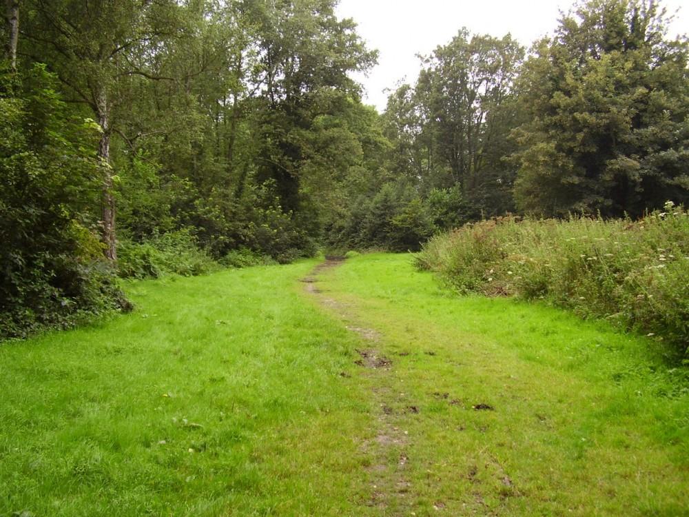 M5 Junction 30 Millenium Woods Topsham dog walk, Devon - Dog walks in Devon