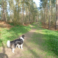 Wixford long dog walk, Warwickshire - Dog walks in Warwickshire