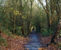 Smestow Valley Nature Reserve dog walk, Wolverhampton, West Midlands - Dog walks in the West Midlands