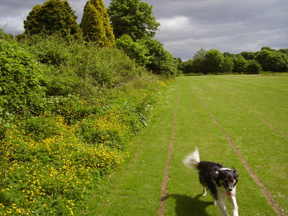 Buxton dog walk, Derbyshire - Dog walks in Derbyshire