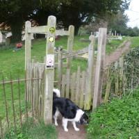Warwickshire dog walk - Henley to Lowsonford circular, Warwickshire - Dog walks in Warwickshire