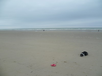 A16 exit 26 Stella - dog-friendly beach, France - Driving with Dogs