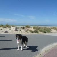 Neufchatel-Hardelot dog-friendly beach, France - Image 1