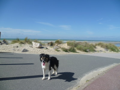 Neufchatel-Hardelot dog-friendly beach, France - Driving with Dogs