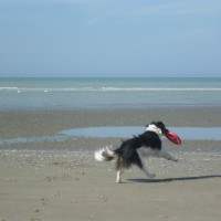 Quend dog-friendly beach, France - Image 1