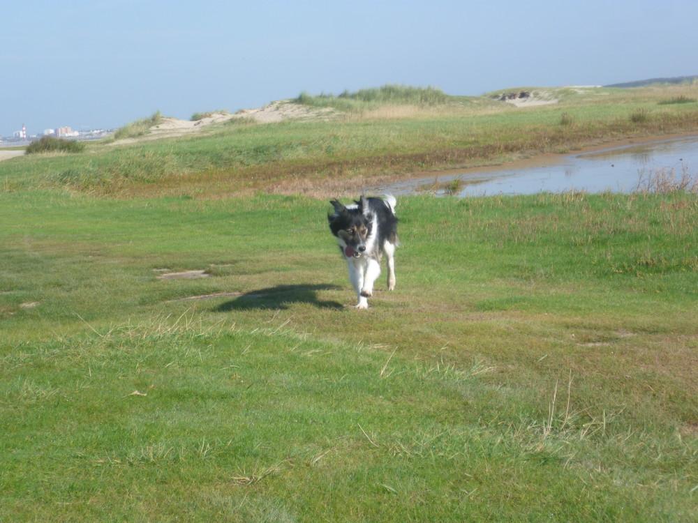 Somme nature reserve dog walk, France - Image 1
