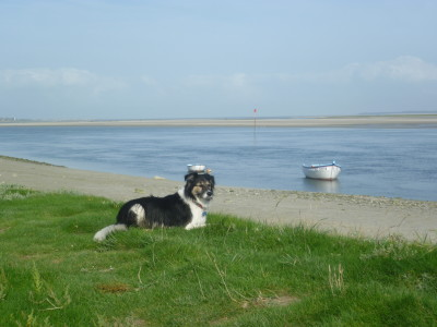 St Valery dog-friendly beach and walk, France - Driving with Dogs