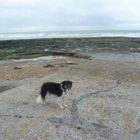 Ambleteuse dog-friendly beach, France - Image 1