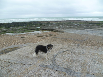 Ambleteuse dog-friendly beach, France - Driving with Dogs