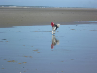 A16 exit 27 Ste Cecile dog-friendly beach, France - Driving with Dogs