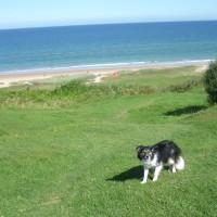 Omaha dog friendly beach, France - Image 1