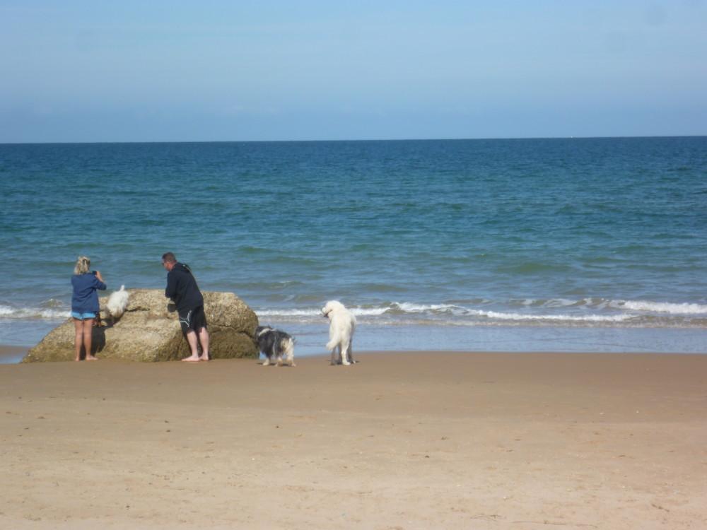 Omaha dog friendly beach, France - Image 2