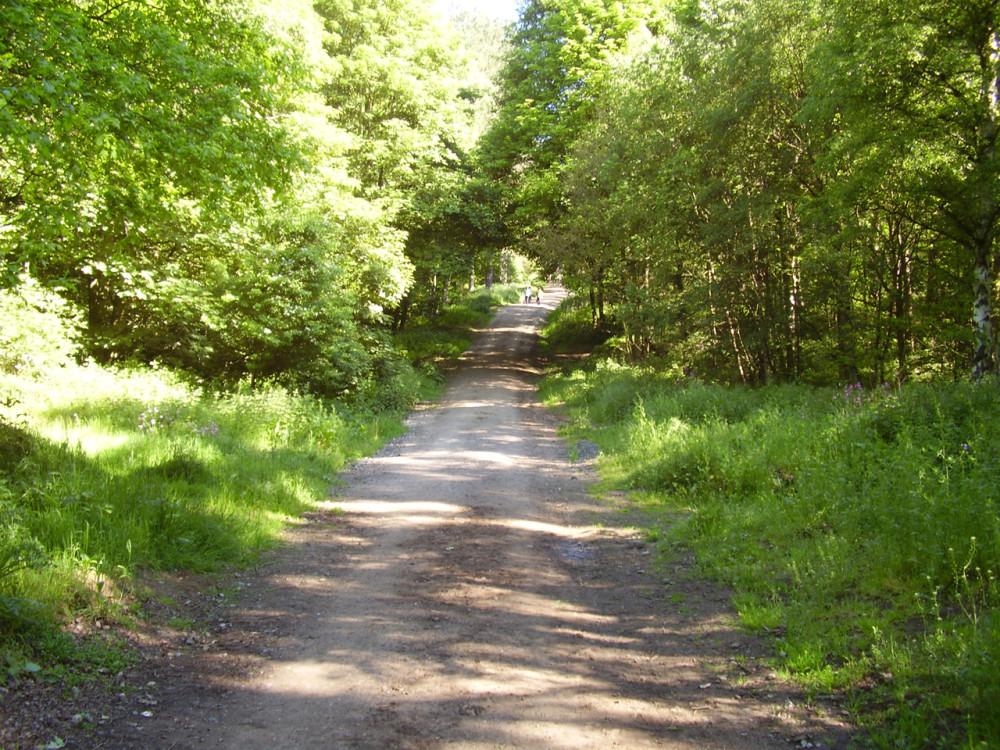 Cloonbur dog walk, RoI - Dog walks in Ireland