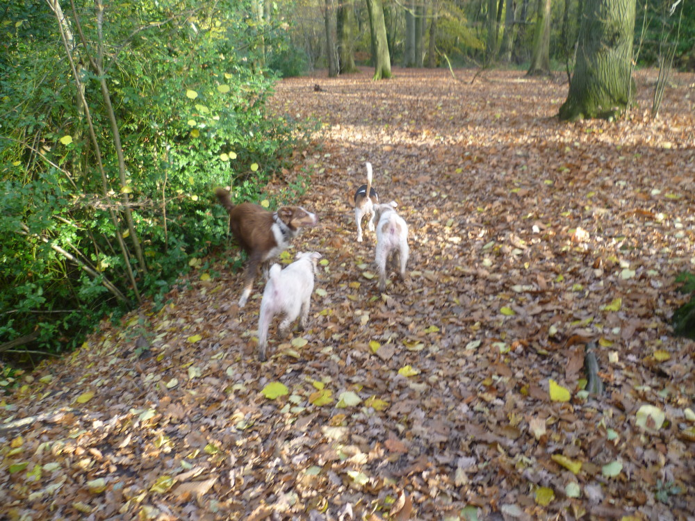 Coille an Fhaltaigh dog walk near Kilkenny, RoI - Dog walks in Ireland