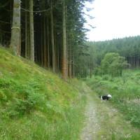 Cloon dog walk, RoI - Dog walks in Ireland