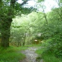 Devil's Glen dog walk, RoI - Dog walks in Ireland