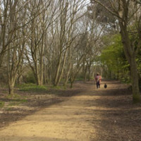 Lodmoor Country Park dog walks, Dorset - Dog walks in Dorset