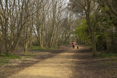 Lodmoor Country Park dog walks, Dorset - Driving with Dogs