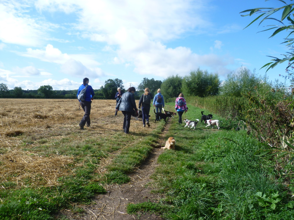Henley-in-Arden dog walk and dog-friendly pub, Warwickshire - Dog walks in Warwickshire