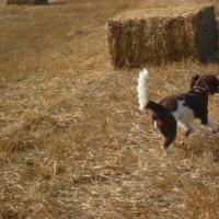 Henley-in-Arden dog walk and dog-friendly pub, Warwickshire - Dog walks in Warwickshire