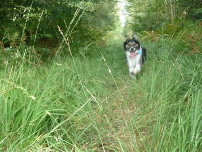 Hunandaye dog walks, France - Driving with Dogs