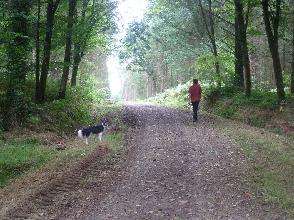 Coetquen Forest dog walk, France - Image 1