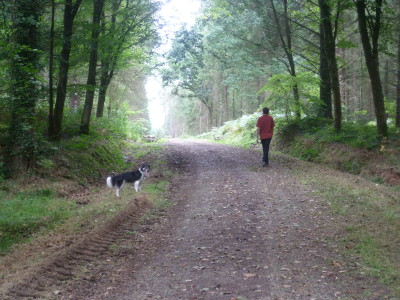Coetquen Forest dog walk, France - Driving with Dogs
