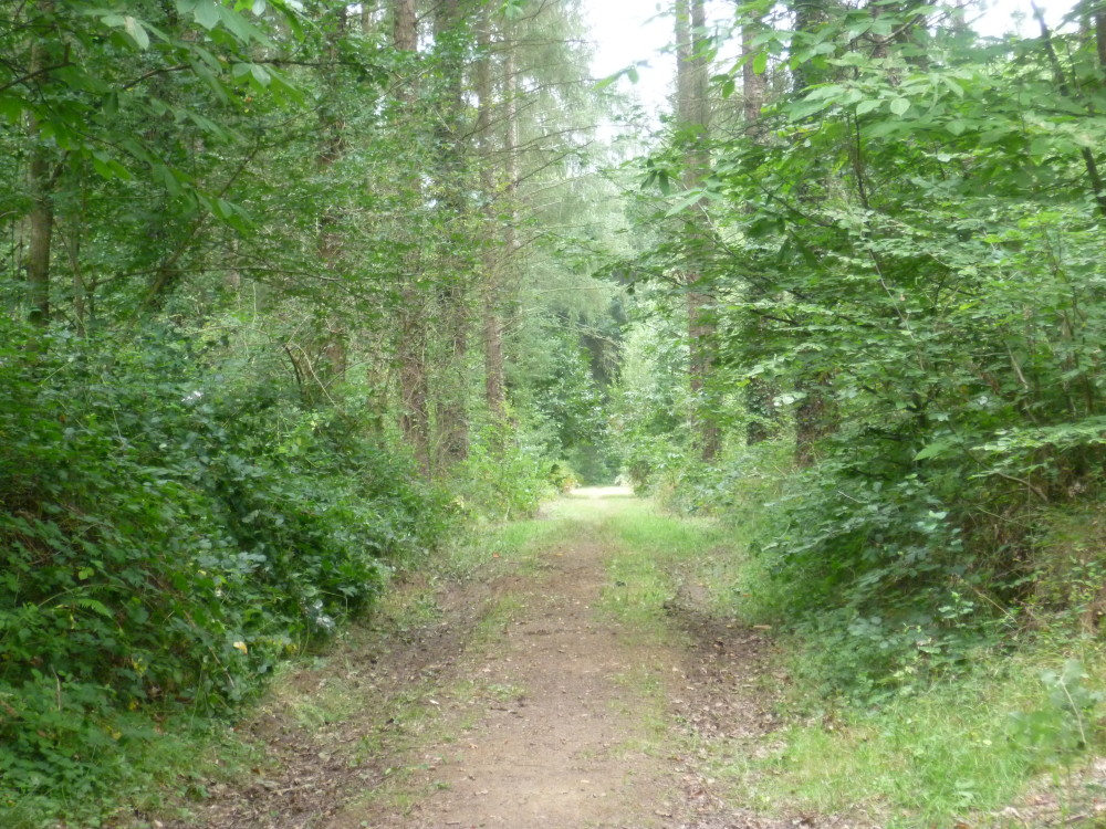 Coetquen Forest dog walk, France - Image 2