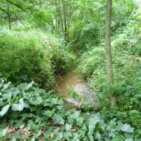 Coetquen Forest dog walk, France - Image 4