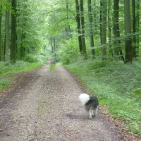 A28 exit 5 forest dog walk near Blangy, France - Image 2