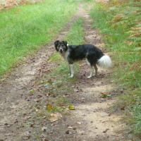 A28 exit 10 Foret d'Eawy dog walk, France - Image 2