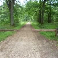 Rambouillet forest dog walk - St Hubert, France - Image 3