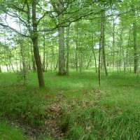 Rambouillet forest dog walk - St Hubert, France - Image 4