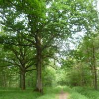 Rambouillet Forest dog walk, France - Image 2