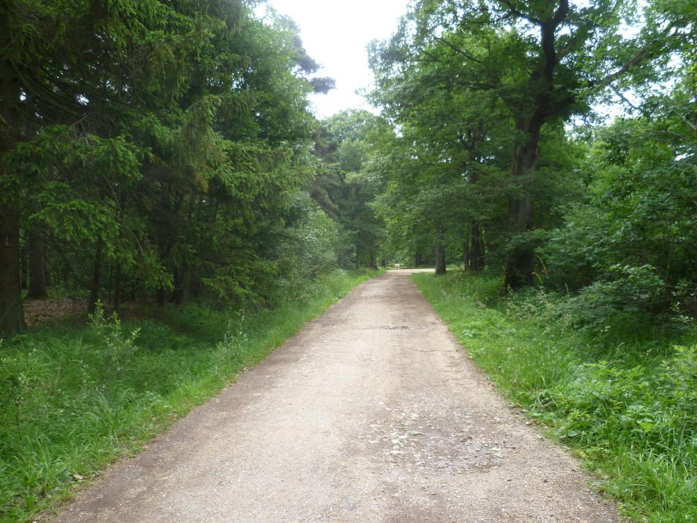 Rambouillet Forest dog walk, France - Image 3