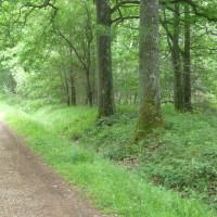 Rambouillet Forest dog walk, France - Image 4