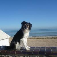 Normandy dog friendly beach, France - Image 1