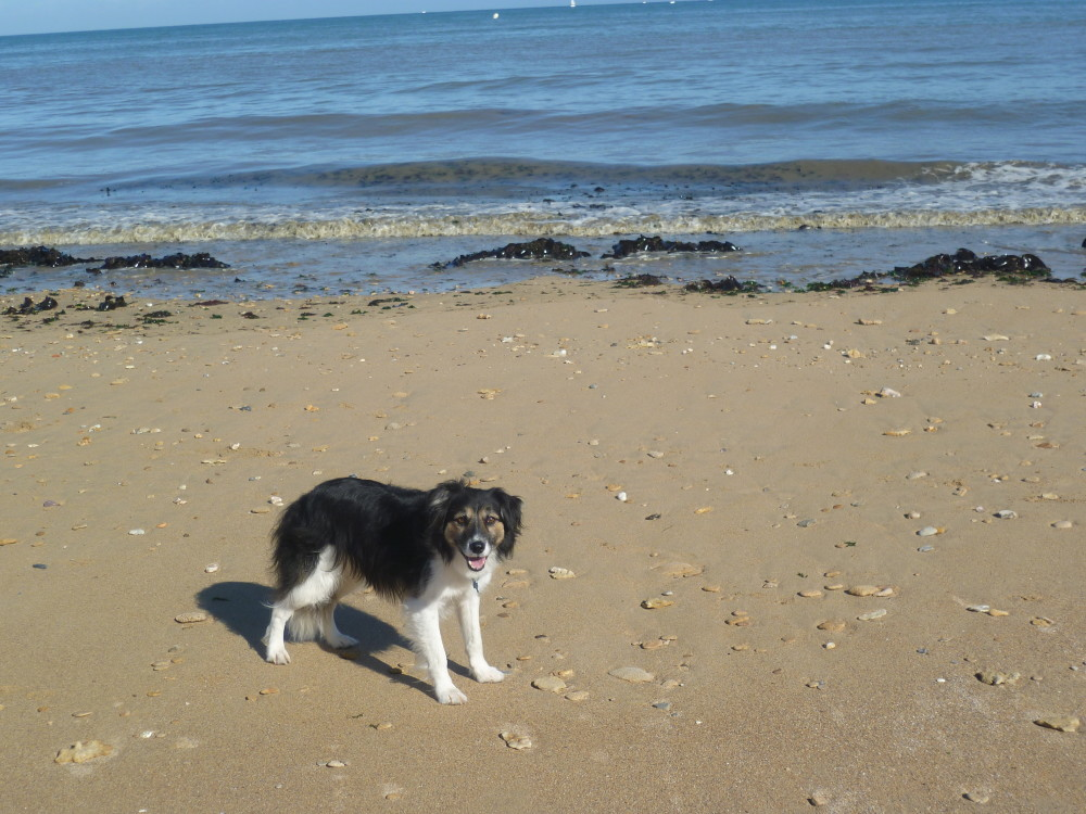 Normandy dog friendly beach, France - Image 1
